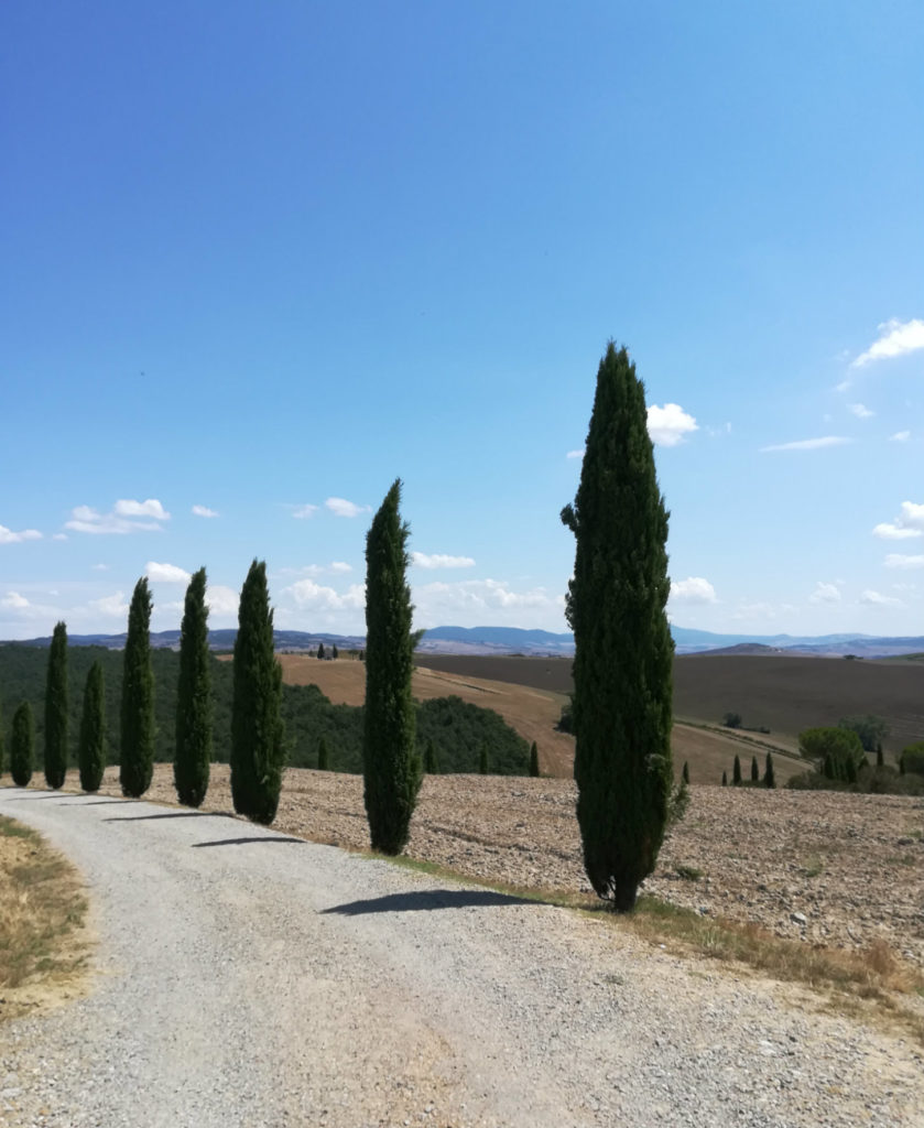 Toscana-san-quirico-cipressi