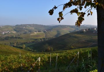 Langhe-collina
